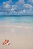 Beige shell op wit zandstrand dichtbij blauwe oceaan Royalty-vrije Stock Afbeelding