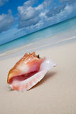 Beige shell op wit zandstrand dichtbij blauwe oceaan Royalty-vrije Stock Foto's