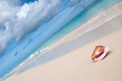 Beige shell op wit zandstrand dichtbij blauwe oceaan Stock Afbeeldingen