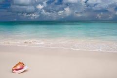 Beige shell op wit zandstrand dichtbij blauwe oceaan Stock Foto
