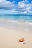 Beige shell on white sand beach near blue ocean Royalty Free Stock Photos