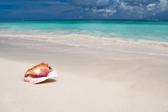 Beige shell on white sand beach near blue ocean. In daylight Stock Image