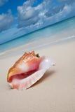 Beige shell on white sand beach near blue ocean. In daylight Royalty Free Stock Photos