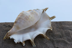 Sea shell on gray sand on a background of a hot sky. Beige shell on white sand beach near blue ocean in daylight Royalty Free Stock Photo