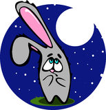 Beige shy rabbit. With a questioning look. At night against Stock Photography