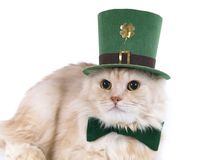 Beige St. Patrick's Day cat Royalty Free Stock Images