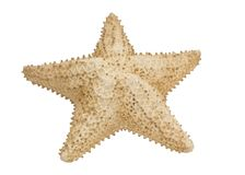 Beige starfish Royalty Free Stock Images