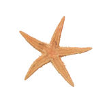 Beige starfish. On a white background Royalty Free Stock Photo