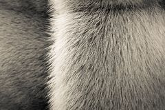 Beige texture of fur animals with a strip Royalty Free Stock Photos