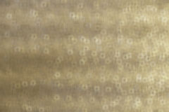 Beige tone illustration for abstract background Royalty Free Stock Photos