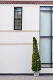 Beige vägg med den gröna växten i kruka Royaltyfri Fotografi