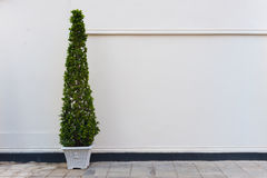 Beige vägg med den gröna växten i kruka Arkivfoton