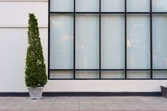 Beige vägg och stort glass fönster med den gröna växten i kruka Arkivfoto