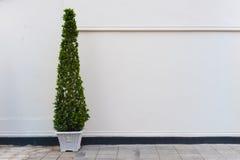 Beige Wand mit Grünpflanze im Topf Stockfotos