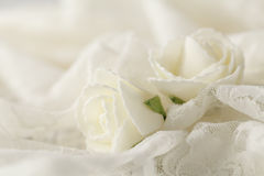 Beige wedding background with roses Royalty Free Stock Image