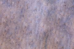 Beige wooden background oak base design rustic natural panel with knots stock photos