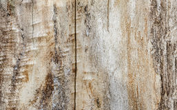 Beige wooden texture, poplar, background Stock Photo