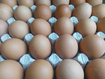 Beigea ägg i ett pappmagasin Royaltyfria Bilder
