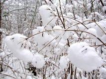 Beignets de neige photo stock