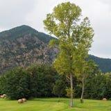 Beigua公园-乡下 库存照片