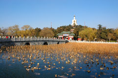 BeiHai Park. In Beijing, the buda and bridge in the winter time Royalty Free Stock Photo