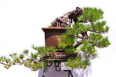 Beihai Park Bonsai Exhibition Royalty Free Stock Image