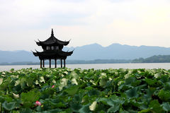 Beihai park scenery with pavilion and lotus in summer in Beijing,China royalty free stock photos