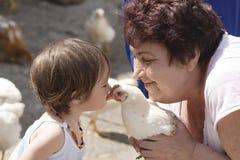 Beijando a galinha Foto de Stock