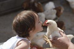 Beijando a galinha Imagem de Stock
