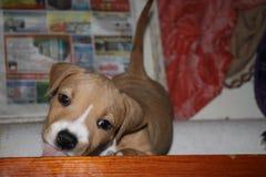 Beijando o animal de estimação do pessoal do cachorrinho fotos de stock
