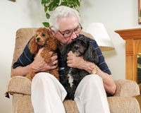 Beijando o cão Fotografia de Stock Royalty Free