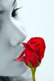 Beijar um vermelho levantou-se Fotos de Stock Royalty Free