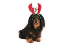 Beije-me Dachshund do Natal Fotografia de Stock Royalty Free