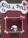 Beije uma Bull Foto de Stock Royalty Free
