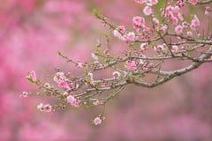 Beijing Botanical Garden cross-stitch Stock Image
