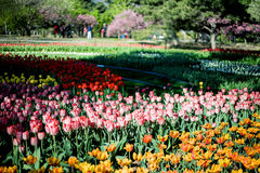 Beijing Botanical Garden Royalty Free Stock Image