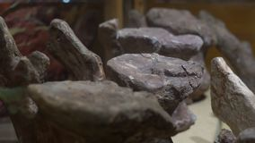 BEIJING, CHINA - OCTOBER 22, 2018: petrified whale vertebrae in the museum of natural history