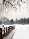 Beijing First Snow.. Stock Image