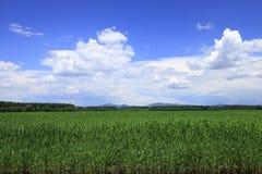 beijing hanshiqiaovåtmark Arkivbilder