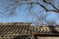 Beijing Hutong's Winter. Winter comes, the bare branches on the courtyard roof of Beijing hutong(alleys Stock Photos