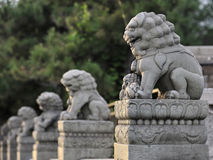 Beijing Marco Polo Bridge lions Stock Photography