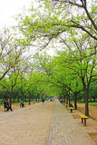 Beijing park boulevard Royalty Free Stock Photos