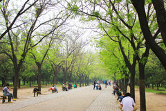 Beijing park boulevard Royalty Free Stock Images