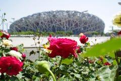 Beijing stadium with flowers. stock image