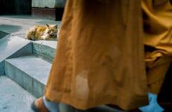 Cat in Fayuan Temple, Beijing China royalty free stock photos