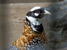 Beijing zoo birds Royalty Free Stock Images