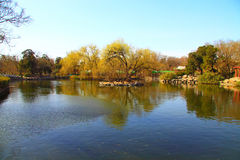 Beijing spring scenery Royalty Free Stock Images