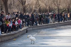 Beijing zoo in winter Stock Images