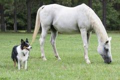 Beijo árabe dos cavalos imagens de stock