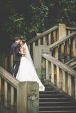 beijo novo à moda elegante dos noivos Fotos de Stock Royalty Free